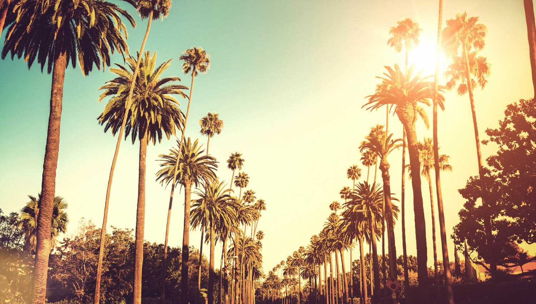 004-palms_plus